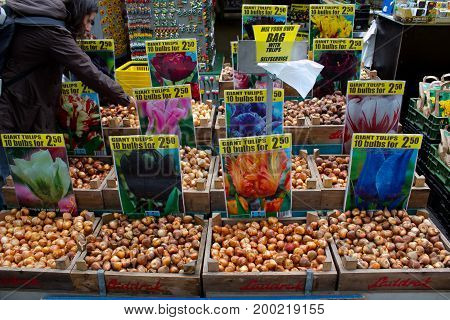 Amsterdam, Netherlands - July 30, 2011: Plenty tulip bulbs selling in Amsterdam