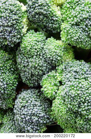 Fresh raw healthy cabbage broccoli as background