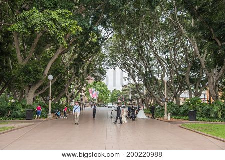 SYDNEY,NSW,AUSTRALIA-NOVEMBER 29,2016: Bride and groom at Hyde Park with photographer taking photos along the fig tree lined streets in Sydney, Australia.