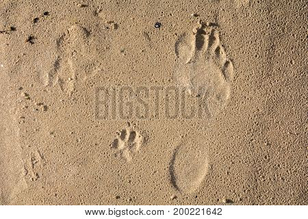 small dog and humans feet prints on a wet sand abstract background