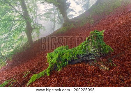 Green on red misty forest in Spain