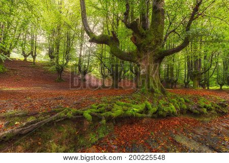 Tree roots in Gorbea Natural Park in Spain