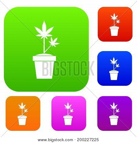 Hemp in pot set icon in different colors isolated vector illustration. Premium collection