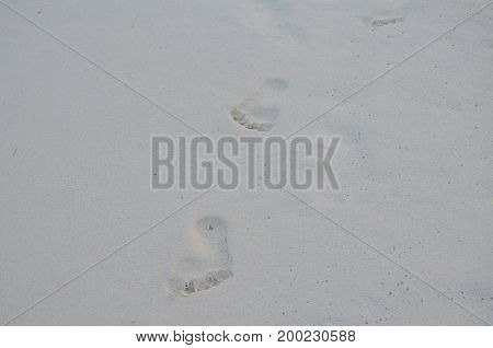 Solitary series of footprints in a sandy beach in Aruba.