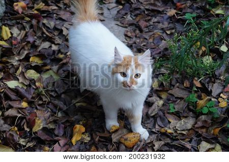 Little fluffy white with red spots of a cat