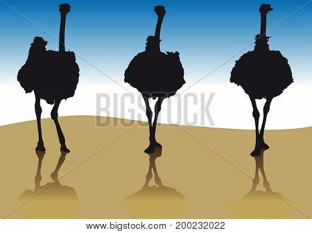 Silhouette of an ostrich in a few coming forward from the front