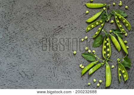 Branch of fresh green peas with pods and leaves on gray textured background. New harvest of organic green peas. Vegetarian and healthy food. Top view