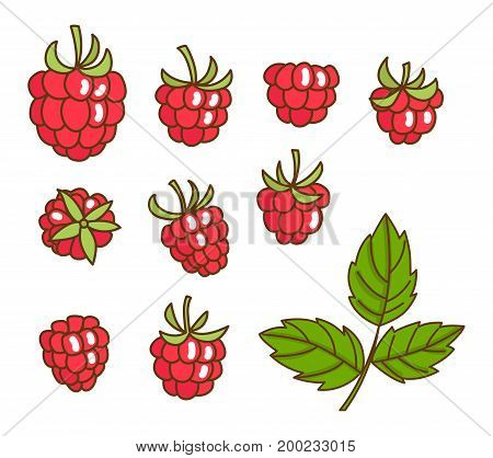 Berries fruit raspberry with leaves for textile prints, cards, design. Flat style, vector illustration