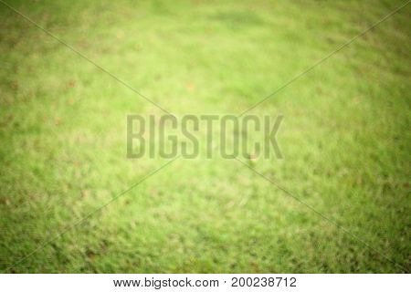 blurred image green grass turf playground and sport field area used for abstract greenery background