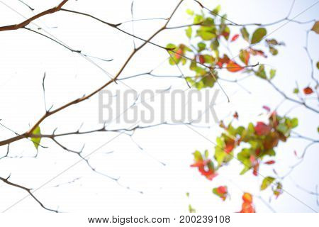 Abstract Blur Autumn Background