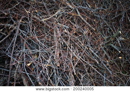 texture of brushwood, Thin wooden branches, firewood