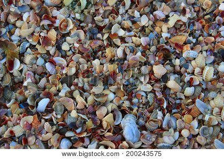 Sea sand background, close up. Beach close-up.Ocean Shells, Conch Shells, Sand texture.