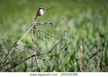 Cute small bird with a clear branchy foreground and a heavy bokeh background