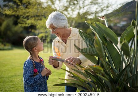 Granddaughter and grandmother looking at a yellow flower on the plant and talking