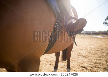 Close-up of girl sitting on the horse back on a sunny day