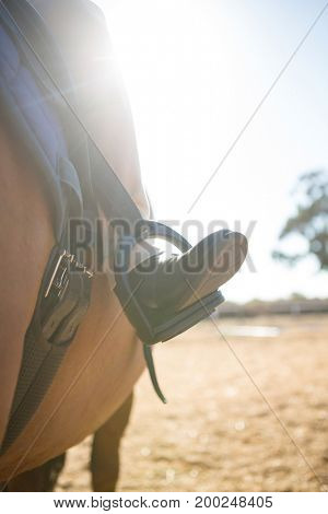 Close-up of child sitting on the horse back on a sunny day