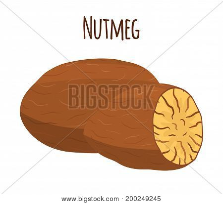 Nutmeg, organic nut, healthy vegetarian food. Natural spices. Made in cartoon flat style. Vector illustration