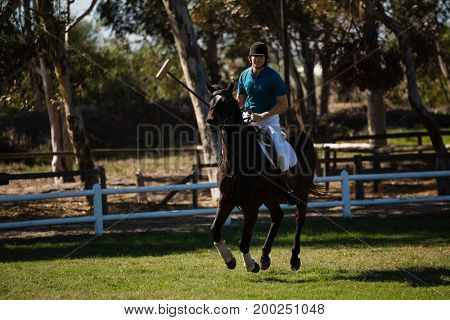 Male jockey riding horse in the ranch on a sunny day