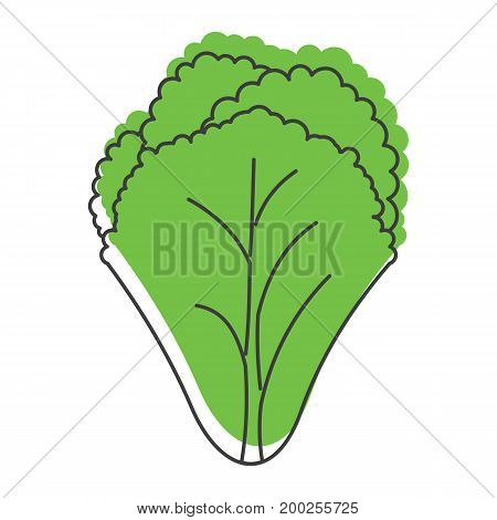 Green salad doodle icon vector illustration for design and web isolated on white background. Green salad vector object for labels  and advertising