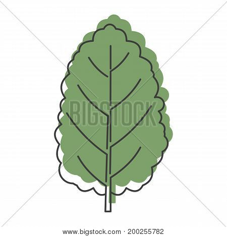 Mangold Beta vulgaris doodle icon vector illustration for design and web isolated on white background. Mangold Beta vulgaris vector object for labels  and advertising