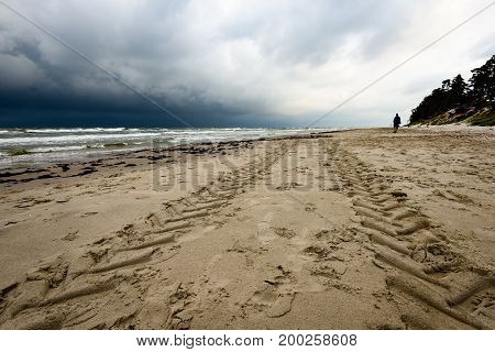 View Of A Stormy Beach In The Morning With Lonely Trees
