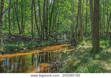 Wild river. Little, unregulated river. It flows through a tall, leafy forest, the banks of the river are full of trees and green grass. The riverbed is contaminated with branches and fallen trees. It is sunny day.
