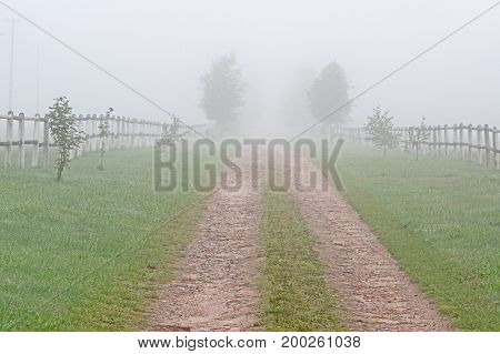 Country Road. Rural land road. The green grass is covered by green grass. Both young, low leafy trees grow on both sides. Next there is a wooden fence running along the road. Another plan hides thick fog.