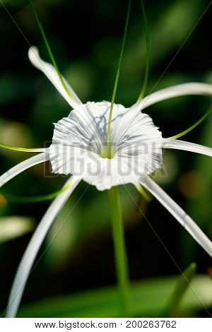 Close-up of one single round white flower blooming in the green garden at daytime.
