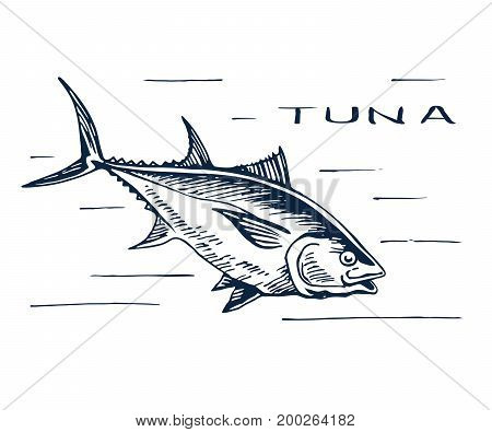 Atlantic bluefin tuna. Endangered species of marine fish. Sirloin meat for sushi. Hand drawn vector sketch.
