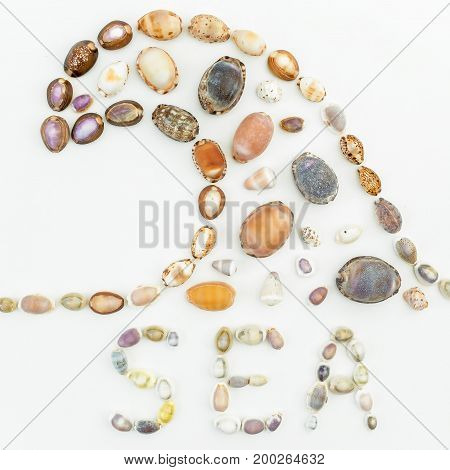 Pattern of sea shells isolated on white background. Flat lay. Top view
