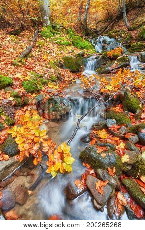 Autumn Creek Woods With Yellow Trees Foliage And Rocks In Forest