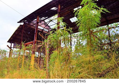 Haunting image of an abandoned collapsing plantation warehouse building taken at an economically depressed forgotten community in Kauai, HI