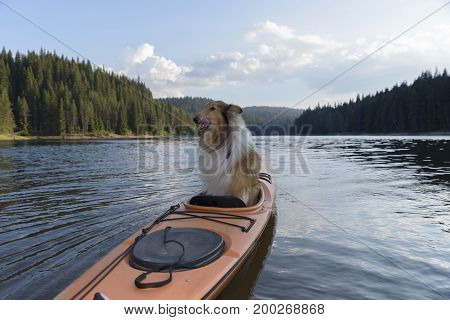 Scottish shepherdlicking himself in a sit-in kayak