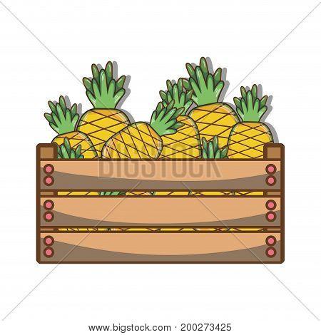 delicious pineapple fruits inside basket vector illustration