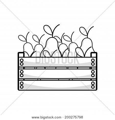 line delicious pear fruits inside basket vector illustration