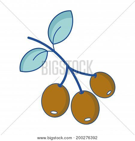 coffee plant with leaves and grains vector illustration
