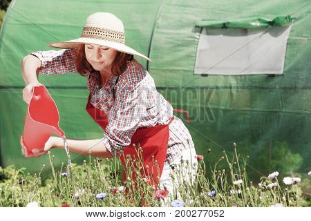 Gardening. Attractive woman in hat red apron working in her backyard garden watering flowers outdoor
