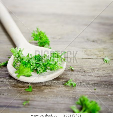green and fresh curly parsley close up