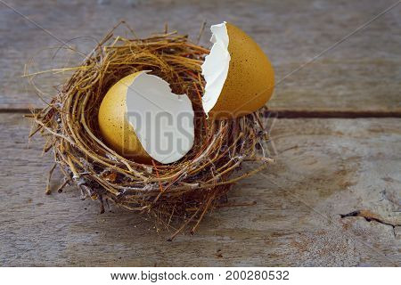 Bird's Nest with Broken Eggshell on an old Wood Panel