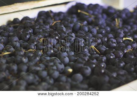 The Black Sultana grapes. Fresh organic fruits
