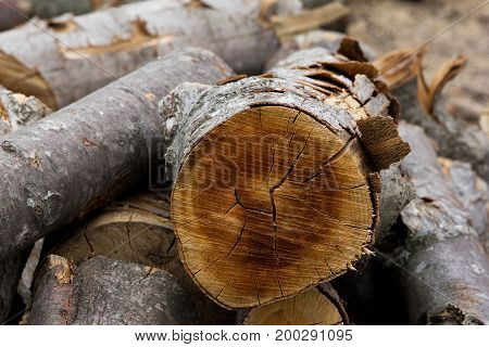 Sawn logs. Firewood. Wood. Timber. Outdoors. Close-up. Background. Texture.