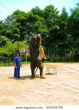 Koh Samui, Thailand - June 21, 2008: The young elephant doing tricks in Thailand, Koh Samui on June 21, 2008