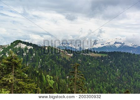 Young Greens Of Deciduous Trees And The Dark Needles Of Fir Trees On The Snowy Slopes Of The Caucasu