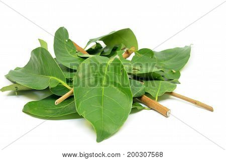 Indonesian Bay Leaf