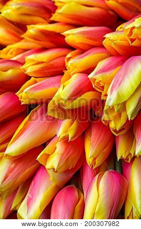 Many Colorful tulips in a flower market