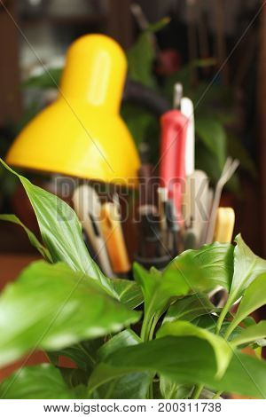 Peace lily on blurred background with yellow lamp and screwdrivers