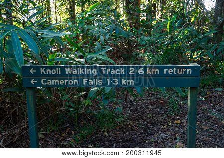 Mt Tamborine, Australia - July 8, 2017: Knoll Walking Track leading to Cameron Falls on Mt Tamborine in the Gold Coast hinterland.