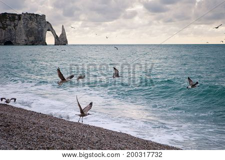 The beach and cliffs of Etretat with a gloomy sky and sea gulls tourist destination of Normandy on the French coast