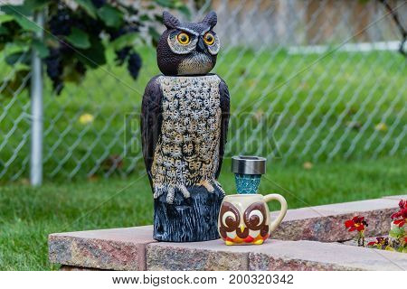 an owl having morning coffee in the garden