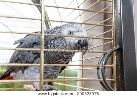 An looking parrot in a cage in a house